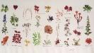 Carl von Linné Herbarium